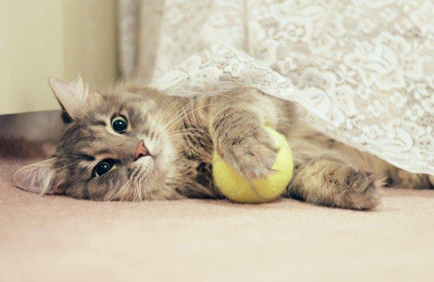 10 accessori indispensabili per il tuo gatto