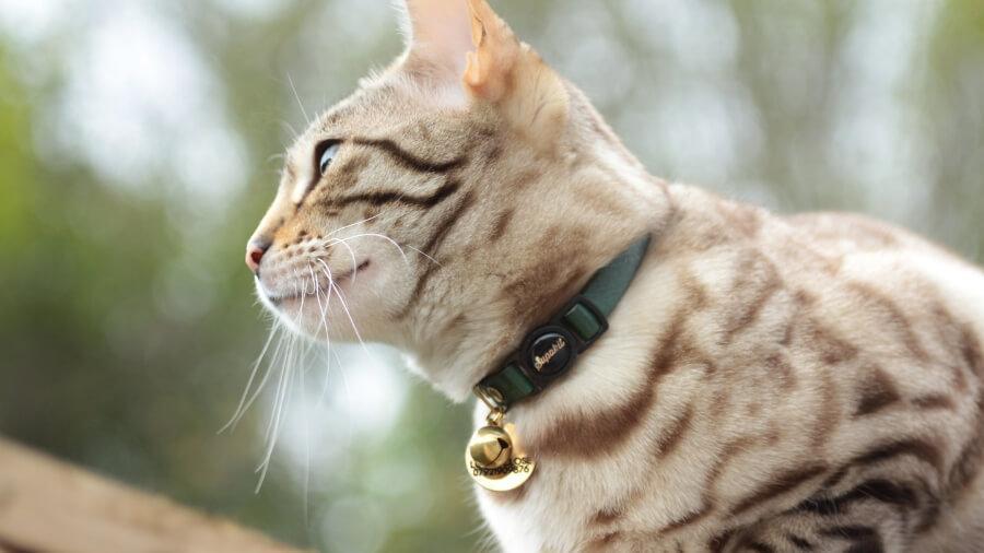 accessorio per gatti indispensabile all'aperto