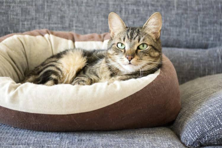 gatto a casa nella sua cuccia