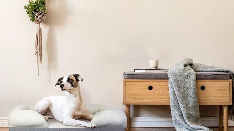 Divani per cani: i migliori modelli per taglia grande, media e piccola!