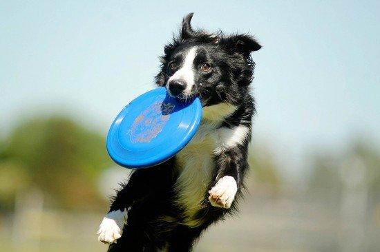 integratori alimentari per cani sportivi naturali