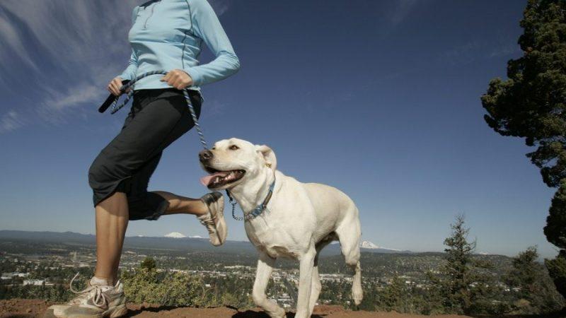 Integratori per cani sportivi