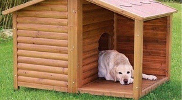 Cucce per cani da esterno: i 4 migliori modelli