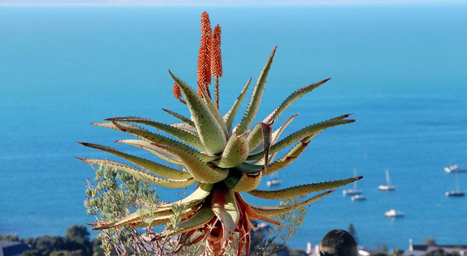 Aloe Ferox in menopausa: ecco come dimagrire! Recensioni e opinioni di chi l'ha usata